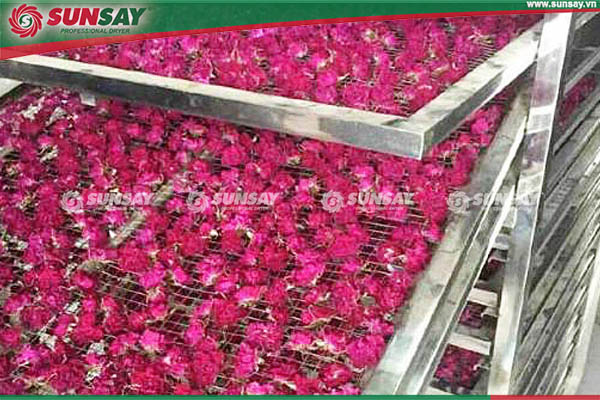 trà hoa hồng sấy lạnh