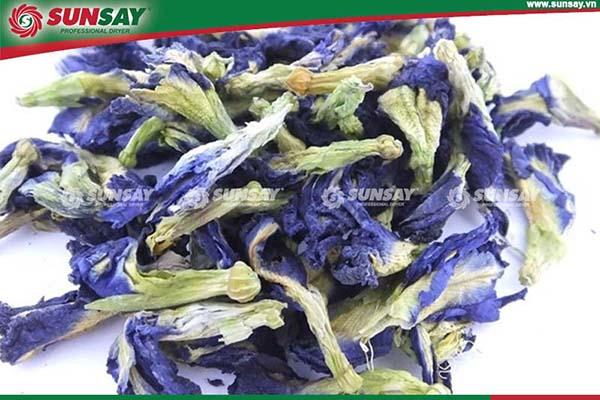 Hoa đậu biếc trồng để làm cảnh, làm giàn leo bóng mát, trang trí